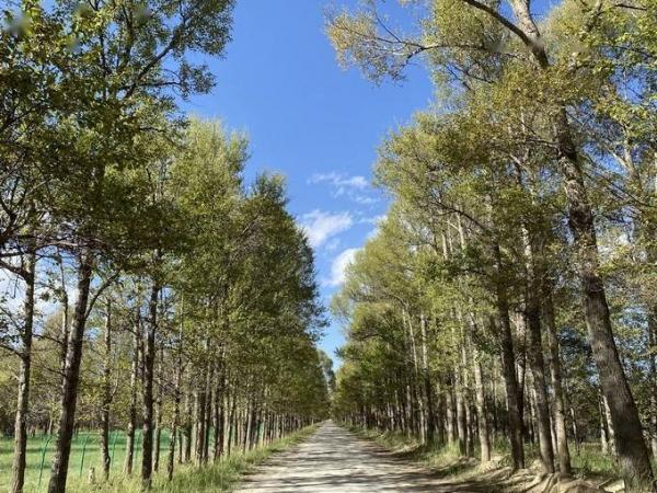 枣庄一农民砍掉自己种的700余棵杨树后被判刑